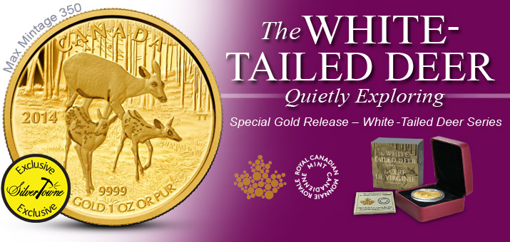 2014 Canada White-Tailed Deer Series | Gold Quietly Exploring
